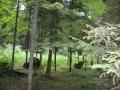 Земельный участок в к/п «Зеленая роща»